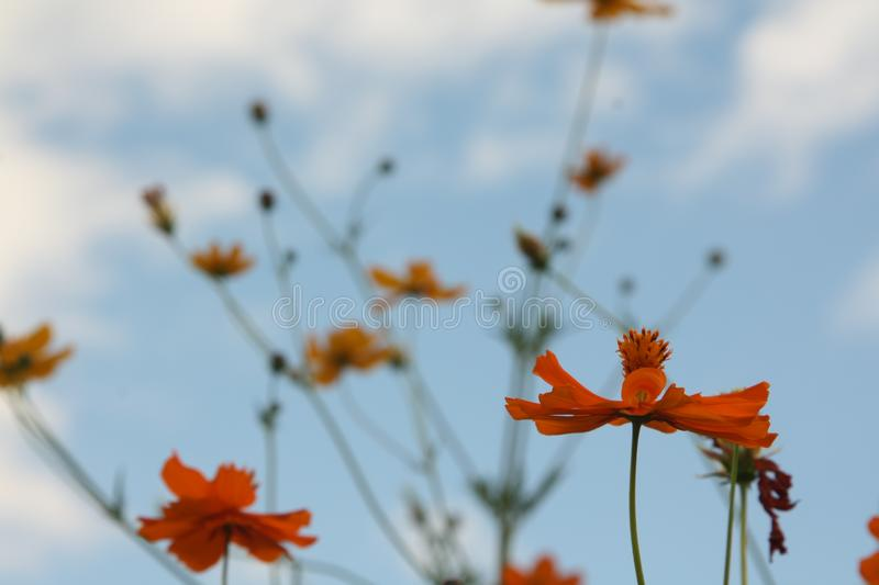 Colorful flowers on the sky. Red, orange royalty free stock photo