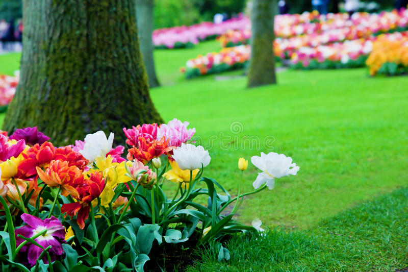 Colorful flowers in spring park stock images