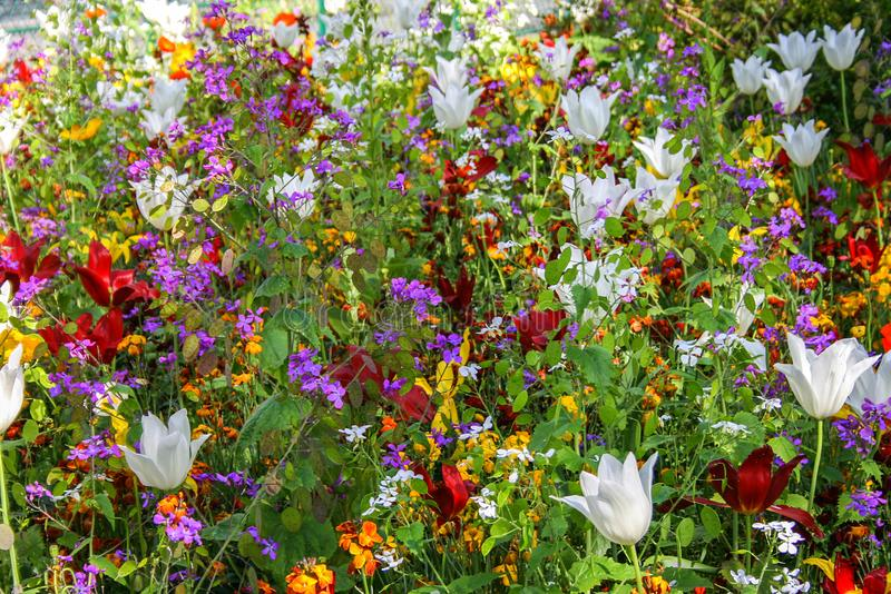 Colorful of flowers in the spring park. Parks of Paris. royalty free stock photography