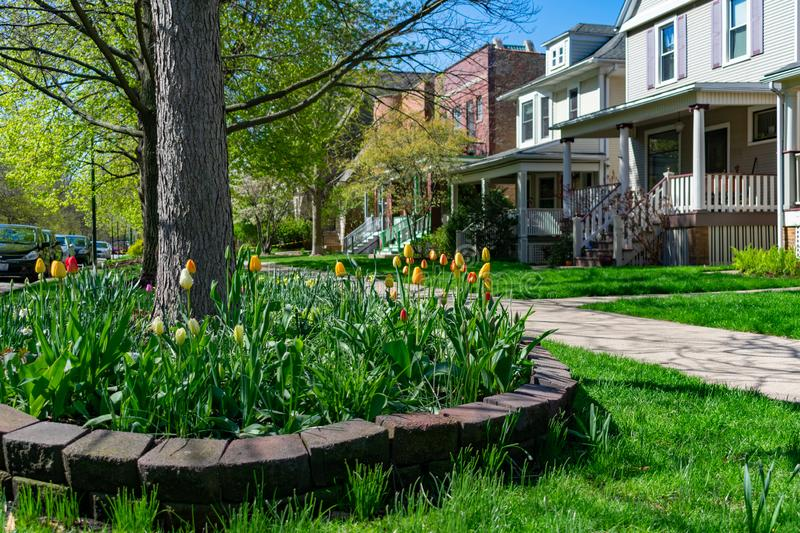 Colorful Flowers and Sidewalk in front of a Row of Old Homes with Grass in the North Center Neighborhood of Chicago stock image