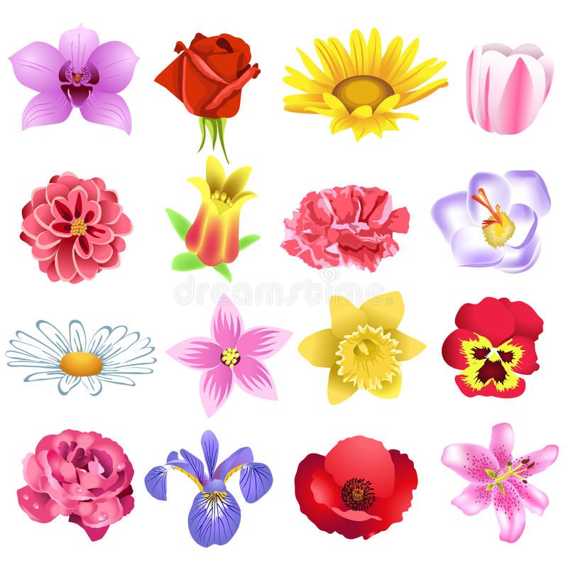 Download Colorful flowers stock photo. Image of grass, flowers - 32487282