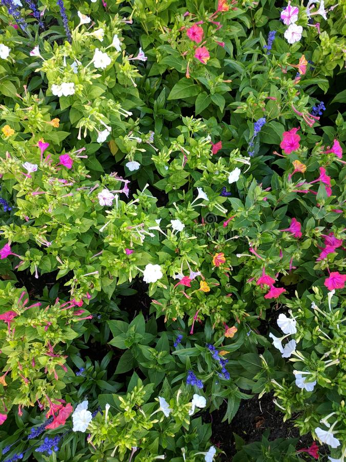 Colorful Flowers. Vibrant, colorful flora stock image