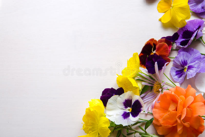 Colorful flowers on a white back ground royalty free stock images