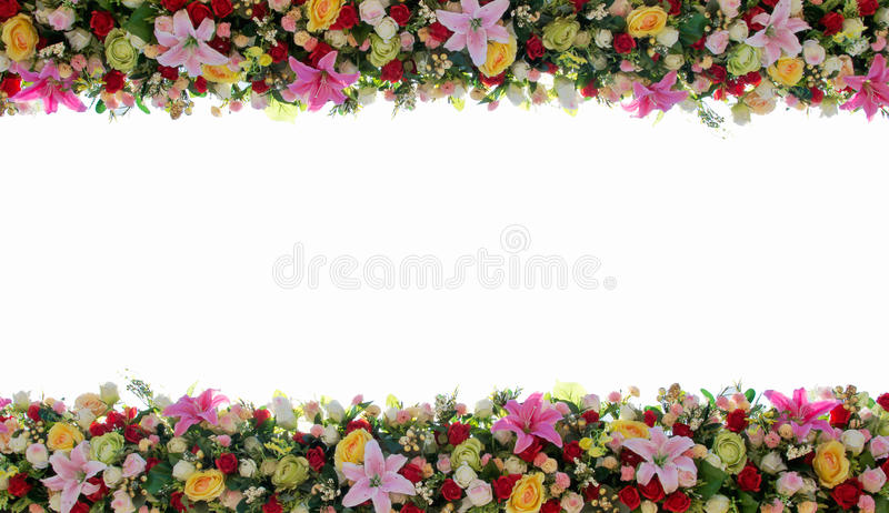 Colorful flowers with white background. royalty free stock photo
