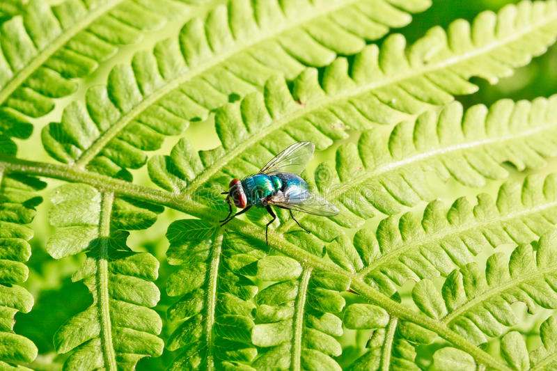 Download Colorful Fly On Green Leaf Royalty Free Stock Image - Image: 22287866