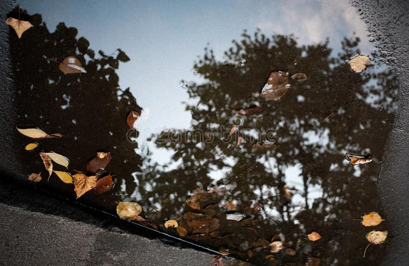 Colorful foliage or leaves floating in the dark water of puddle with reflection of the trees. Autumn or fall concept royalty free stock photos