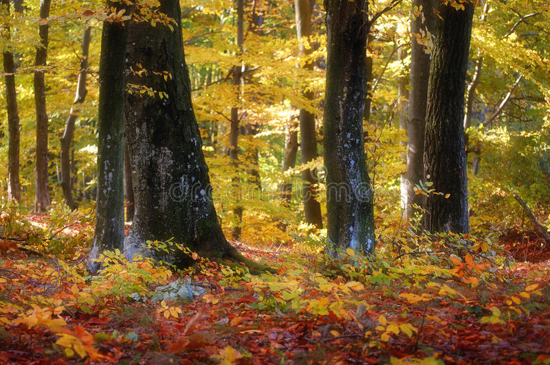 Download Colorful Forest In Autumn Stock Images - Image: 22820574