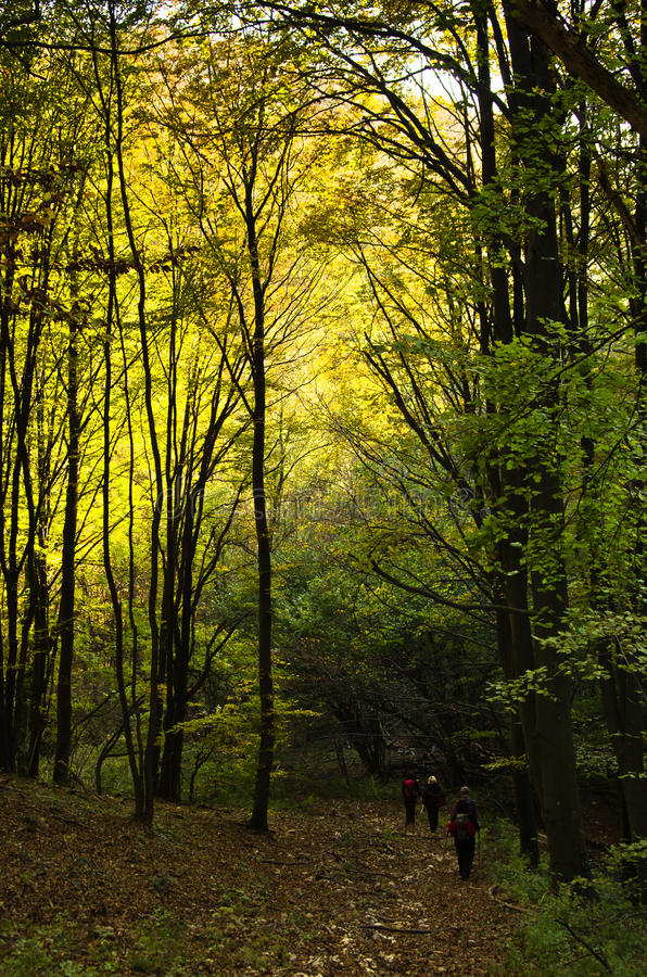 Colorful forest path for trekking on a sunny autumn day stock image