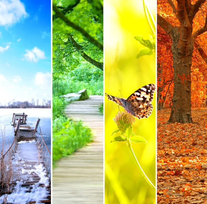 Colorful four seasons royalty free stock photo