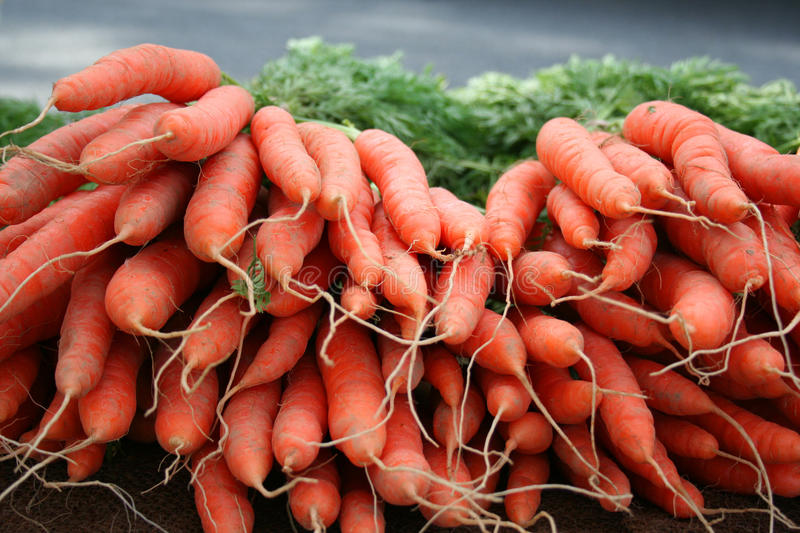 Colorful fresh carrots for sale royalty free stock image