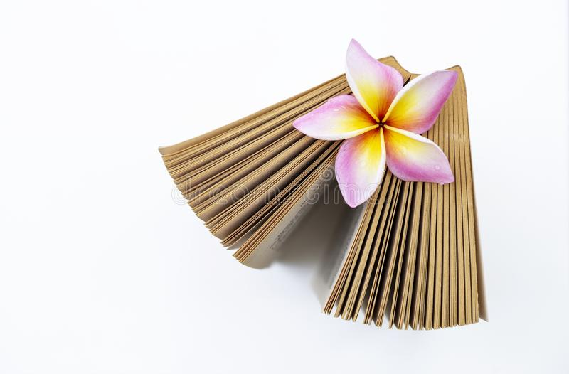 Colorful fresh Plumeria flower on old book royalty free stock photo