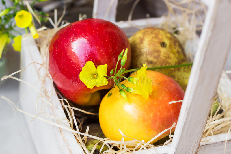 Colorful fresh red yellow apples pears in vintage wood box on straw, yellow flower, outdoor in garden, summer royalty free stock photo