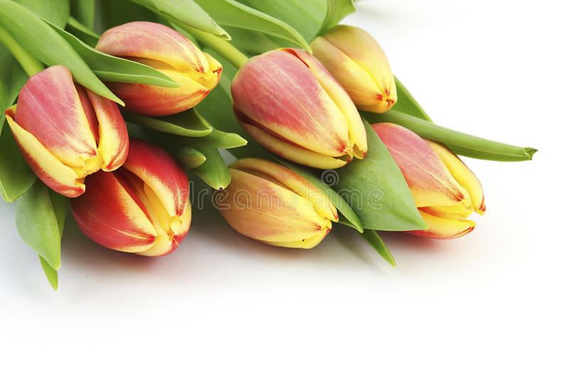 Colorful fresh spring tulips flowers stock photography