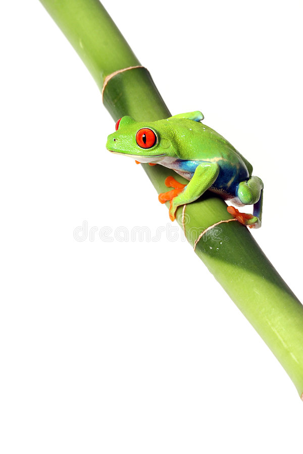 Colorful Frog stock image