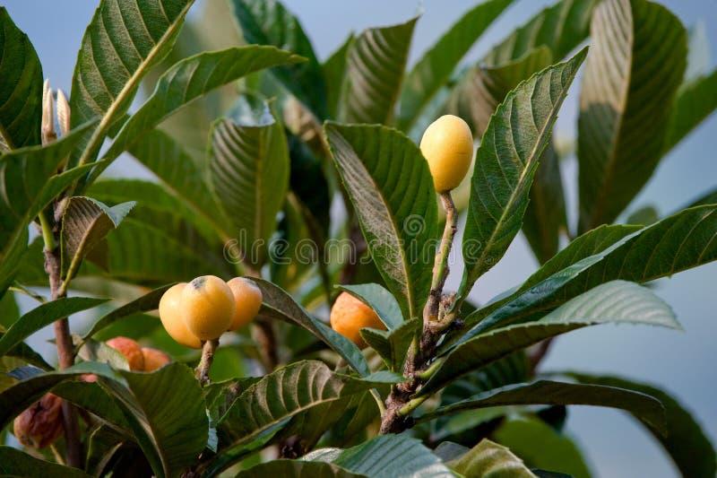 Colorful fruit on tree stock photo