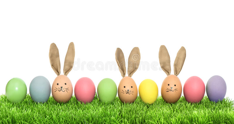 Colorful funny bunny easter eggs in green grass. Over white background royalty free stock photo