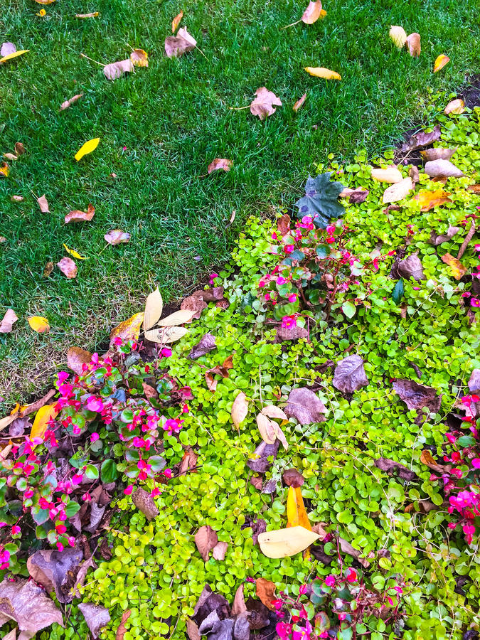 Colorful garden and autumn leaves stock photo