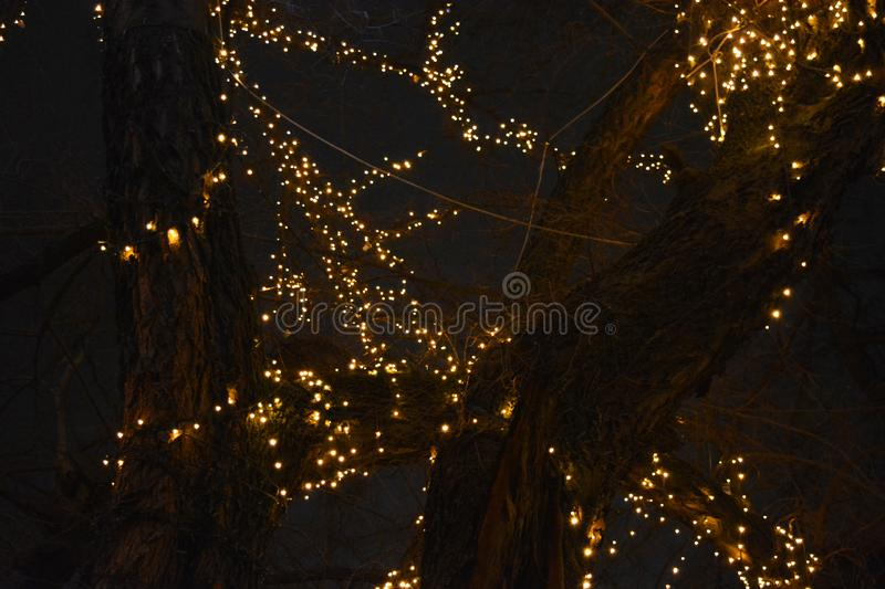 New Year`s, festive decoration of a winter tree is gold LED, yellow luminous diodes, light bulbs. royalty free stock image
