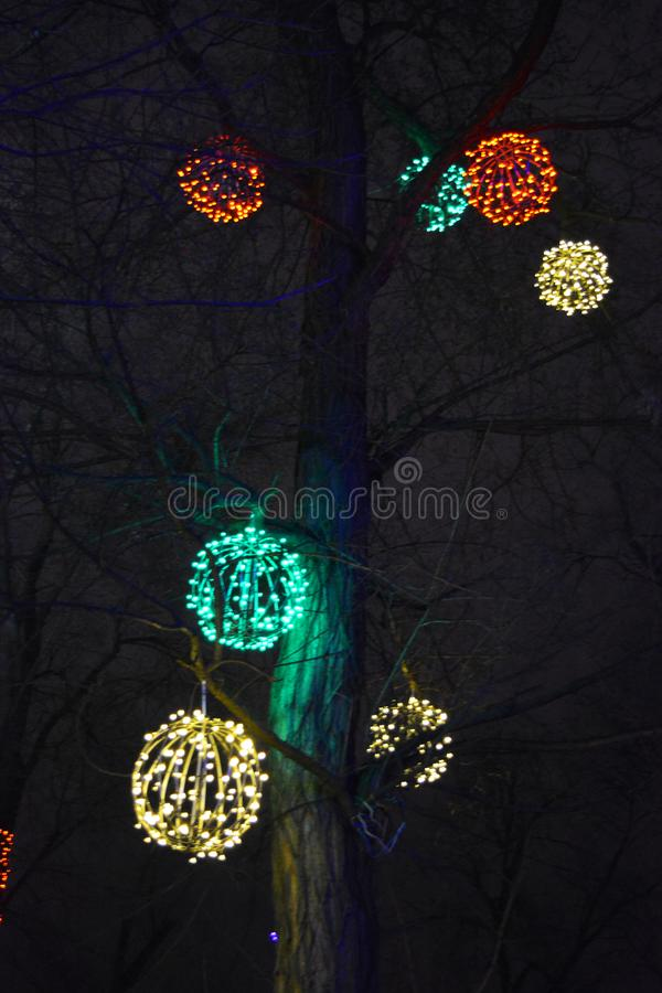 New Year`s, festive decoration of a winter tree is gold LED, yellow luminous diodes, light bulbs. stock images