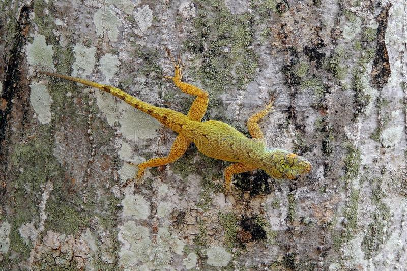 Download Colorful small lizard stock image. Image of climbing - 34197345