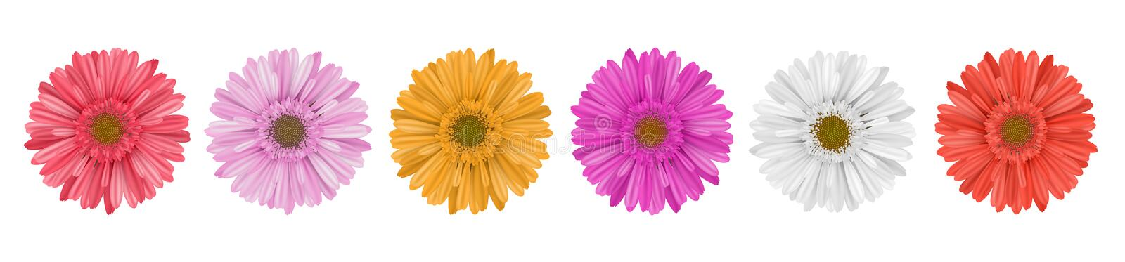Colorful gerbera daisy flower row for banner stock illustration