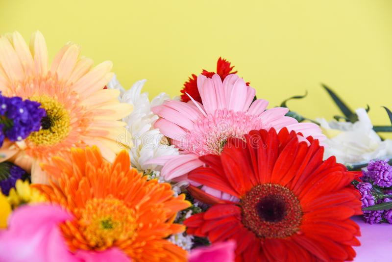 Colorful gerbera flower spring summer yellow background. Colorful gerbera flower spring summer on yellow background stock photo