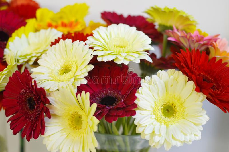 Colorful gerberas in salon of flowers. stock photos