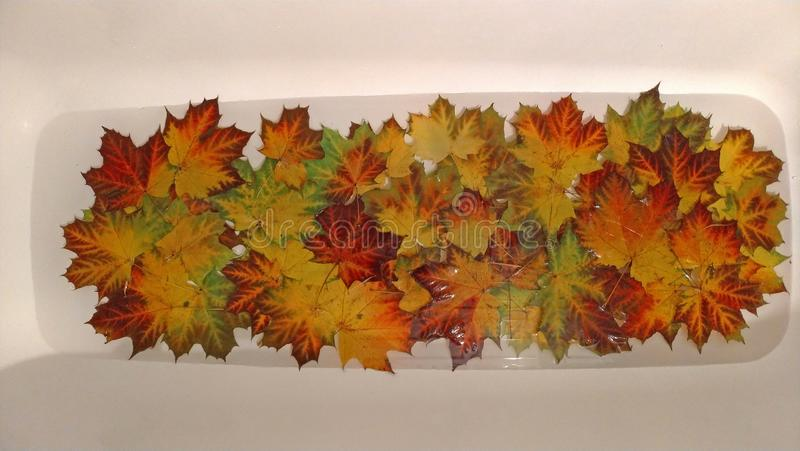 Colorful gold autumn leaves. Beautiful autumn background, wallpaper. Copy Space for your text royalty free stock photos