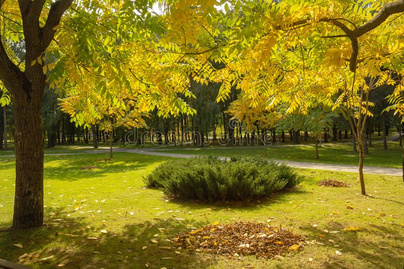 Colorful Golden foliage in the autumn Park stock photos