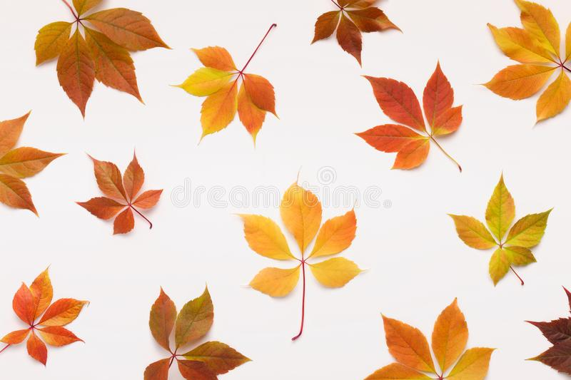 Colorful Grape leaves falling randomly over white background. Live wallpapers concept. Colorful Grape leaves falling randomly over white background royalty free stock photography