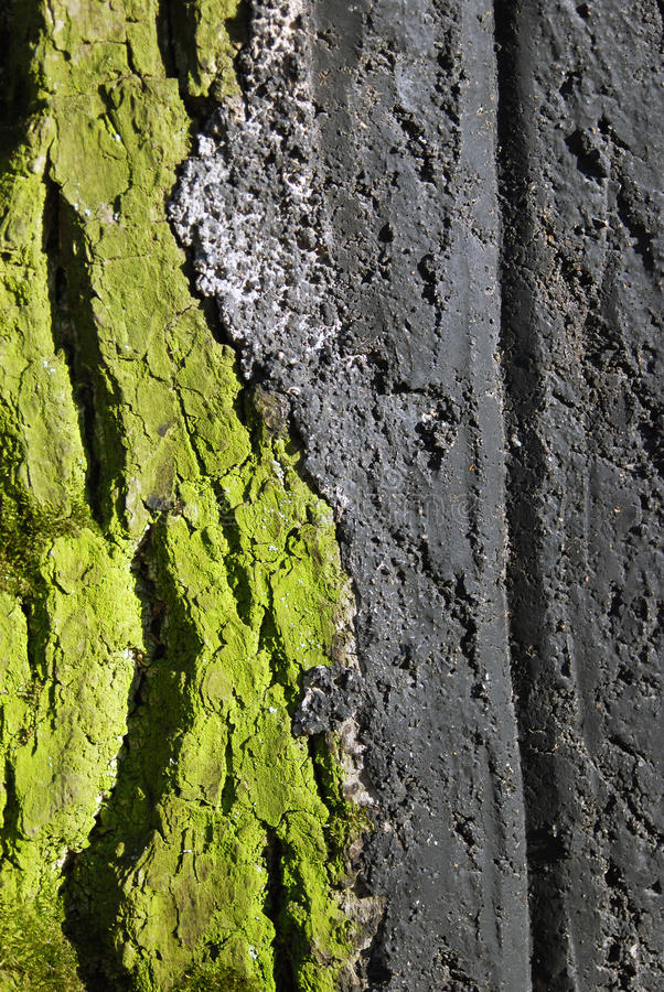 A colorful green tree trunk detail. Green mold covers an old tree trunk. Photo taken in Kolomenskoye park in Moscow in spring stock photos