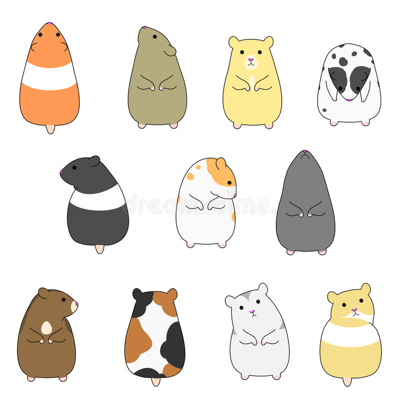 Colorful hamsters set vector illustration