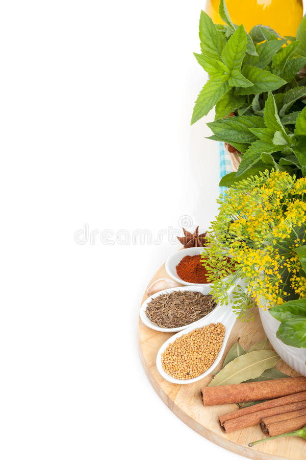 Colorful herbs and spices selection royalty free stock photo