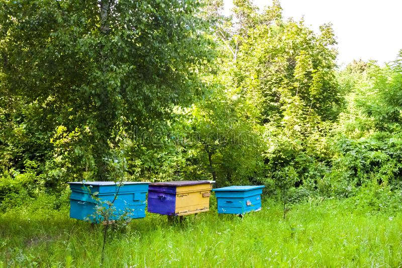 Colorful hives in apiary in a summer garden stock photography
