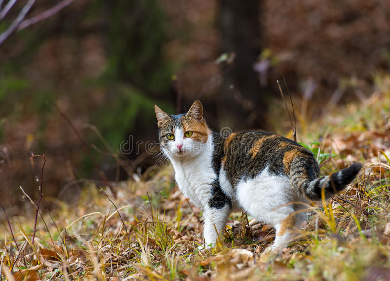 Download Colorful Home Cat In The Forest For Hunting Stock Photo - Image: 28497736