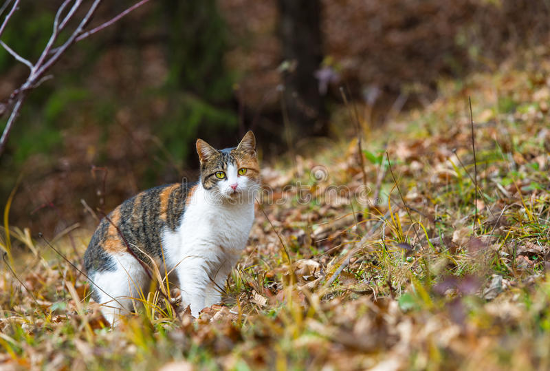 Download Colorful Home Cat In The Forest For Hunting Stock Photo - Image of domestic, beautiful: 28497806