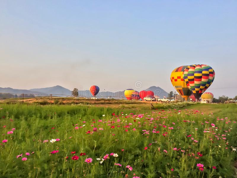 Colorful hot air balloon floating over cosmos flower field at Singha Park Chiang Rai International Balloon Fiesta stock photo