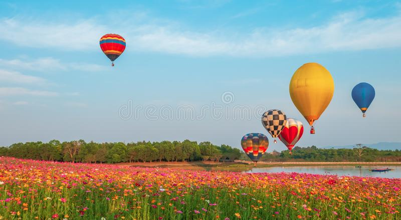 Colorful hot air balloon over cosmos flowers field on sky. stock images
