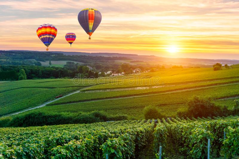 Colorful hot air balloons flying over champagne Vineyards at sunset montagne de Reims stock image