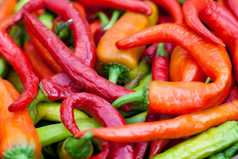 Colorful hot peppers harvest. Beautiful green red orange vegetables selective focus photography. Up view shallow depth. Of field stock photos