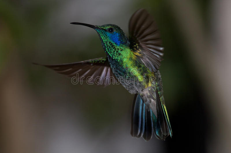 Colorful hummingbirds flying - photo#33