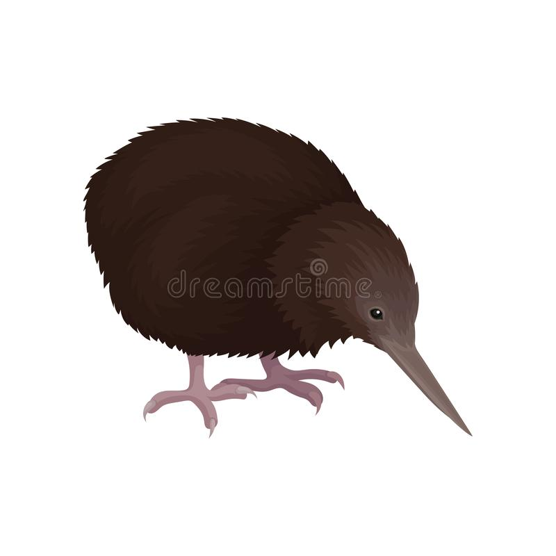 Detailed flat vector icon of kiwi bird. Wild Australian animal with long beak, brown feathers and short legs. Wildlife. Colorful illustration of kiwi bird. Wild royalty free illustration