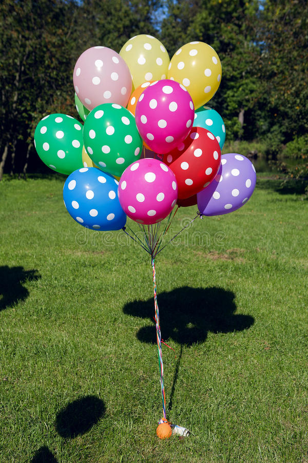 Colorful inflated helium balloons polka dots in the bundle are flying off the trees. In the forest in summer on holiday stock photos