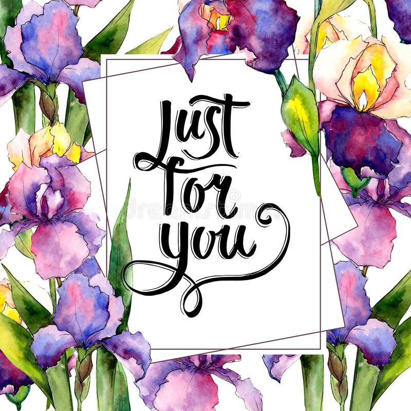 Colorful irises. Floral botanical flower. Wild spring leaf wildflower frame. Aquarelle wildflower for background, texture, wrapper pattern, frame or border stock illustration