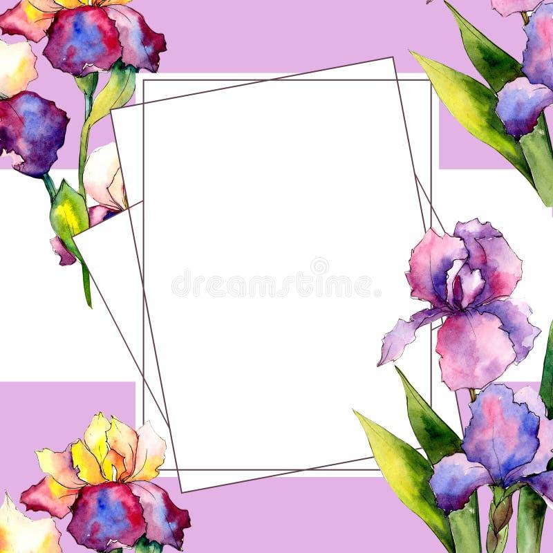 Colorful irises. Floral botanical flower. Wild spring leaf wildflower frame. Aquarelle wildflower for background, texture, wrapper pattern, frame or border vector illustration