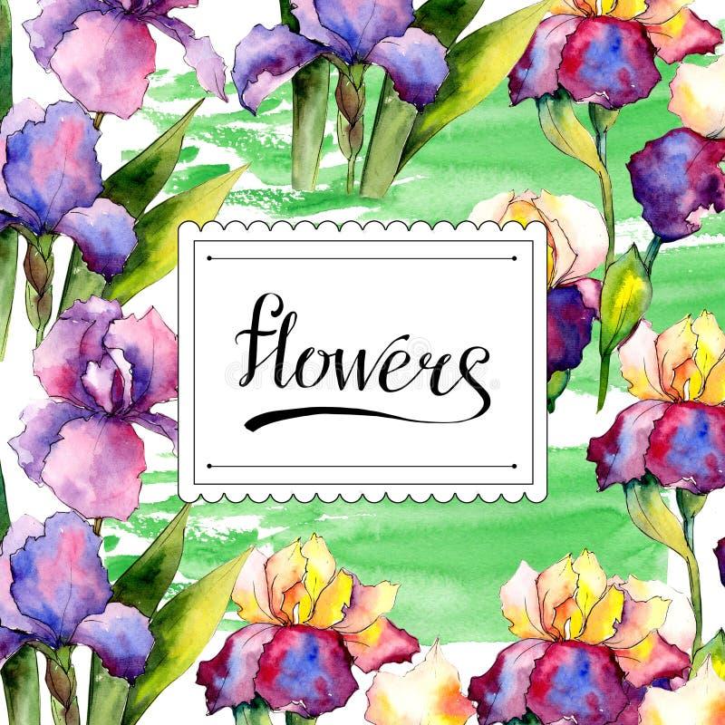 Colorful irises. Floral botanical flower. Wild spring leaf wildflower frame. Aquarelle wildflower for background, texture, wrapper pattern, frame or border royalty free illustration