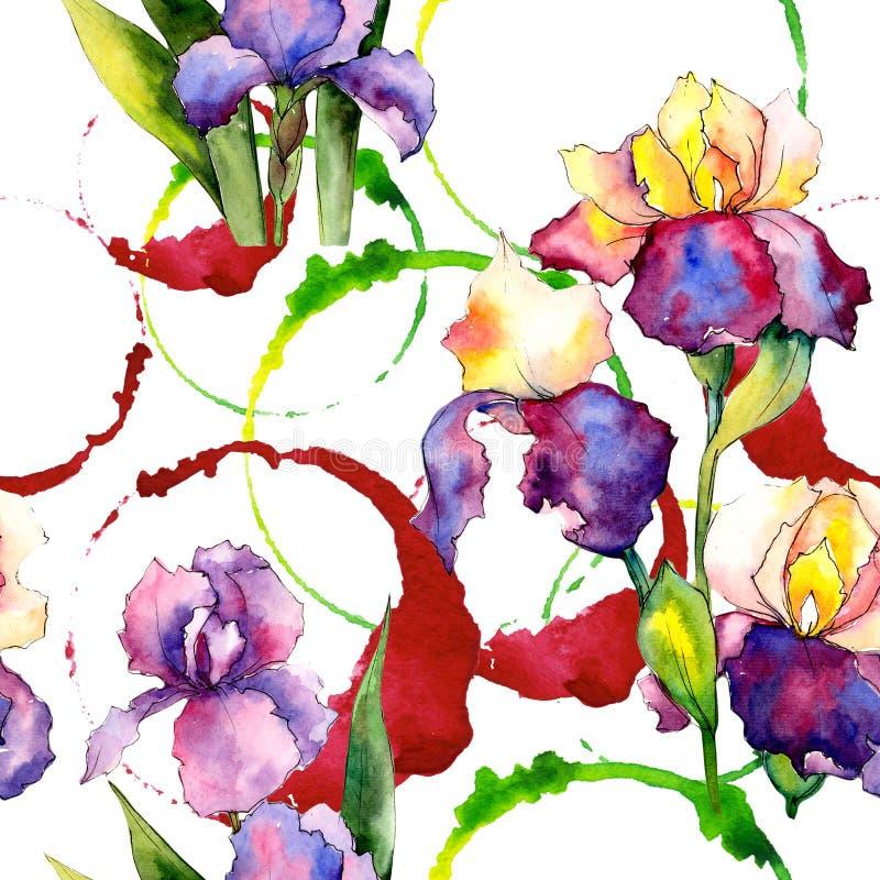 Colorful irises. Floral botanical flower. Wild spring leaf wildflower pattern. Aquarelle wildflower for background, texture, wrapper pattern, frame or border stock illustration