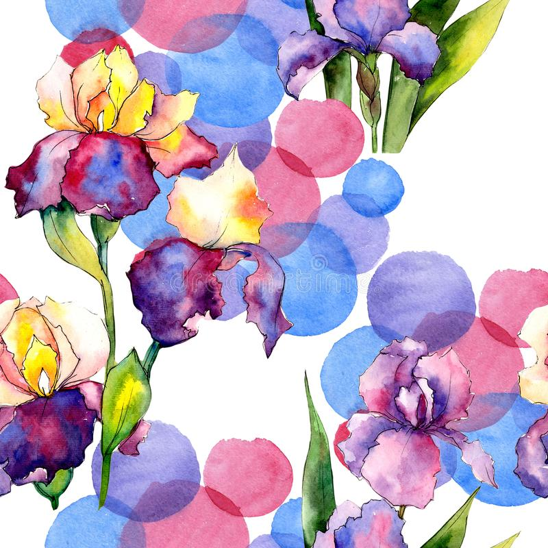Colorful irises. Floral botanical flower. Wild spring leaf wildflower pattern. Aquarelle wildflower for background, texture, wrapper pattern, frame or border vector illustration