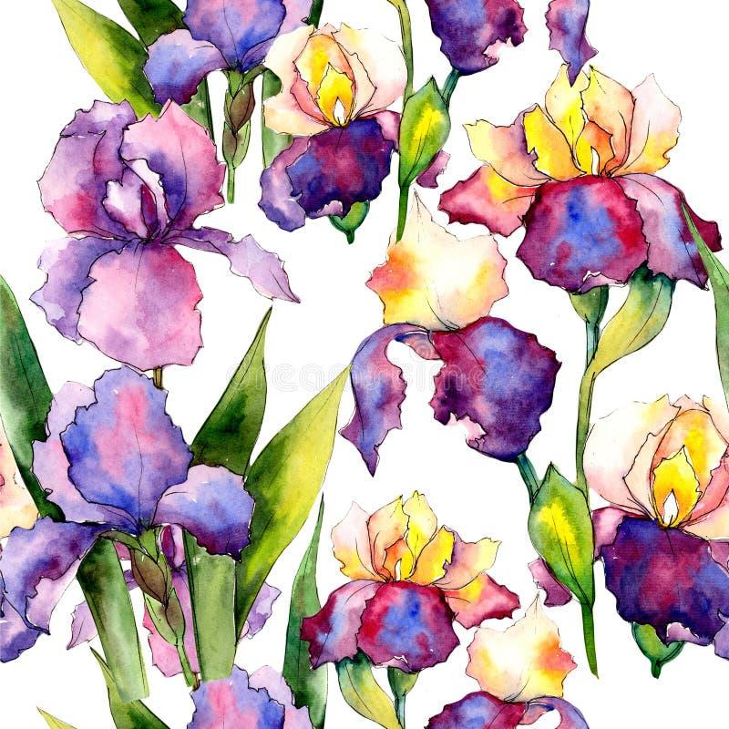 Colorful irises. Floral botanical flower. Wild spring leaf wildflower pattern. Aquarelle wildflower for background, texture, wrapper pattern, frame or border royalty free illustration