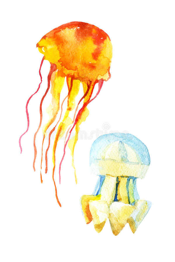 Colorful jellyfish set isolated on white background vector illustration